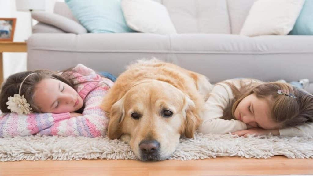 The 4 Best Dog Beds For Golden Retrievers Buyers Guide