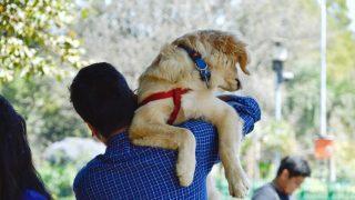 best dog collars for golden retrievers